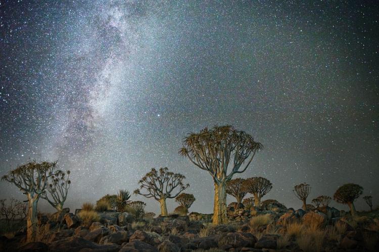 beth-moon-vieu-arbre-etoile-10